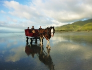 Golden Sands Horse & Wagon Tours