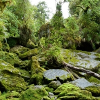 Bullock Creek